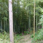 竹の切り出し