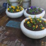 花壇植え替え作業