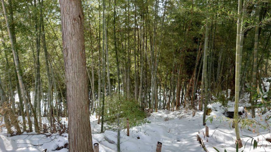 正月装飾用竹の切り出し