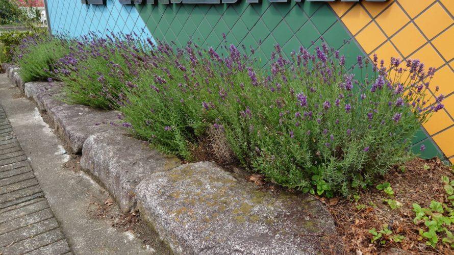 土と庭木のある庭は環境改善の第一歩?